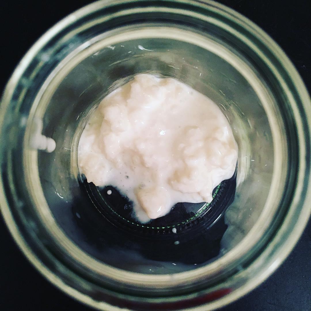 hongo de kefir de cabra