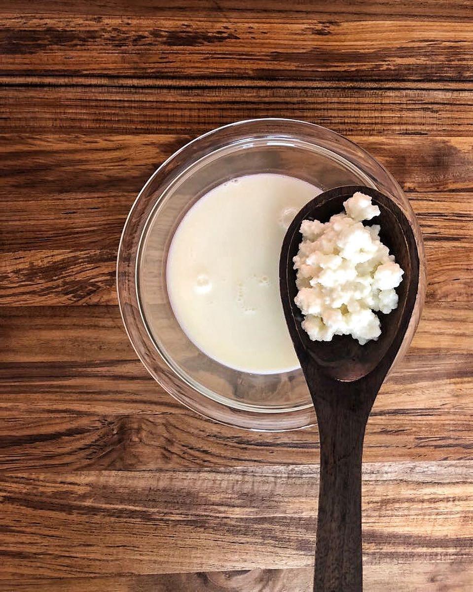 hongo de kefir de leche
