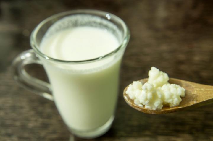 kefir y nodulos de leche