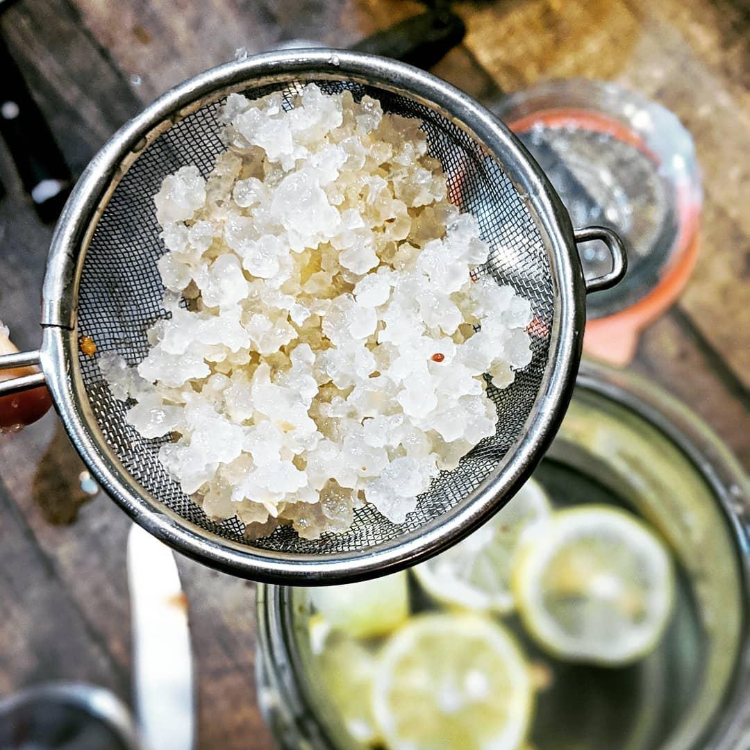 granos de kefir de té